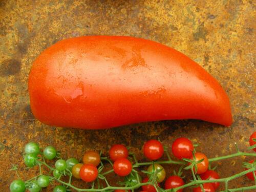 Polish Linguisa Heirloom Tomato Seeds Plum Paste Tomato