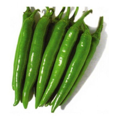 Asian INDIAN Super Hot Green Chilli Kasa Morich কাঁচা মরিচ  Seeds All Season
