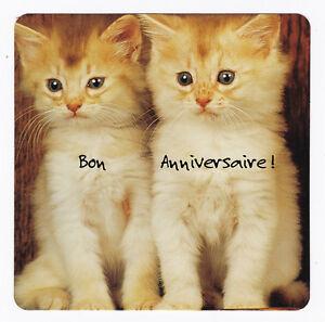 Chat Chaton Carte Postale N Ffu 0066 Bon Anniversaire Ebay
