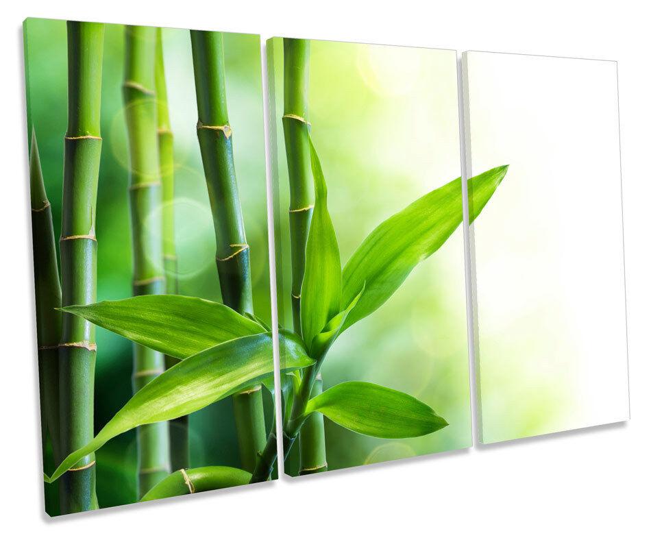 Bamboo Floral  TREBLE CANVAS WALL ART Box Framed Print