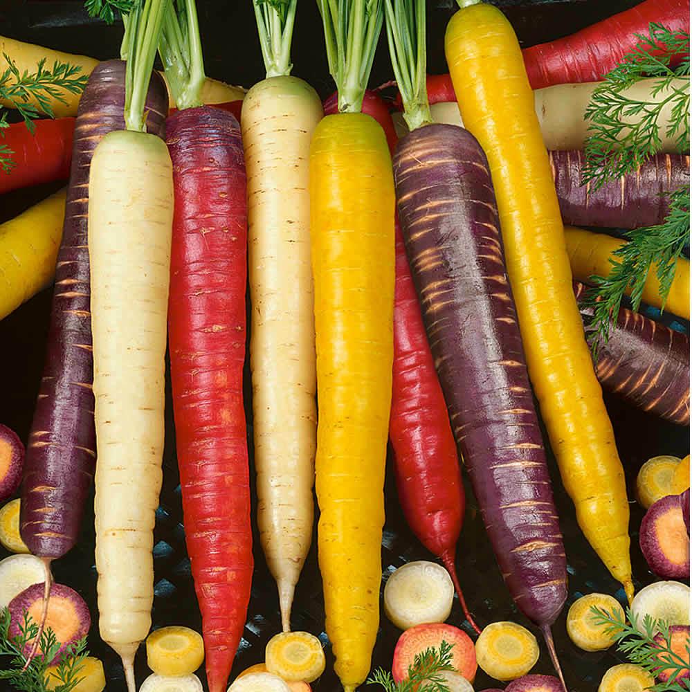 Rainbow Carrot Seeds Multicolour Carrot Vegetable   400 Seeds
