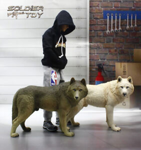 High-Quality-1-6-Scale-Wild-Wolf-Snow-White-Black-Brown-for-12-034-Action-Figure