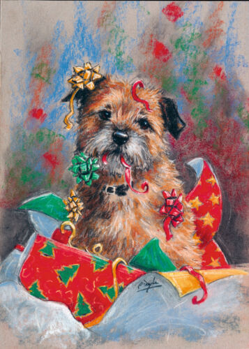 Christmas cards pack of 10 by Paul Doyle Border Terrier Dog C476X
