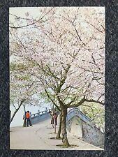 Cherry Blossoms Beside Changchun (Everlasting Spring) Bridge Postcard