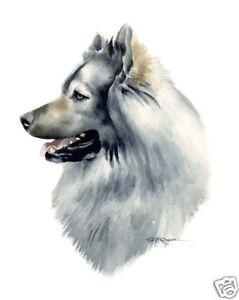 EURASIER-Dog-Painting-ART-11-X-14-Print-Signed-DJR