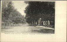 Morrison IL Road & Homes c1905 Postcard