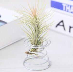 Metal-Spring-Air-Plant-Holder-amp-Rack-Stand-Constrains-Flower-Holder