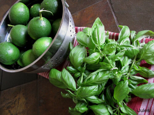 ZESTY AROMA OF LIME LIME BASIL SEEDS CITRUS FLAIR 100 SEEDS* GOURMET *
