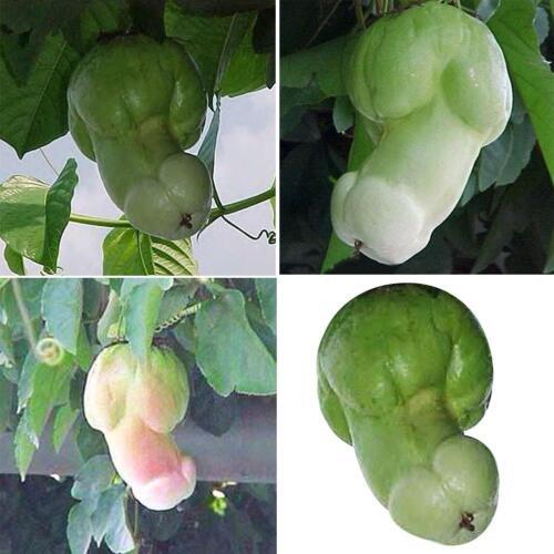 30x Kürbiskerne Seltene Melone Organische Gemüsesamen Pflanzen Hausgarten Decor