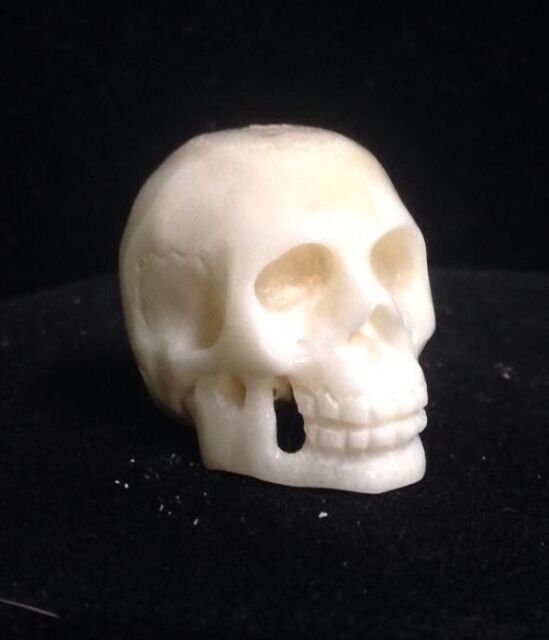Skull Bead Anatomical Natural Water Buffalo Bone 22x26x25mm Hand Carved 1 Piece For Sale Online Ebay