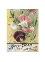 Art Print On Silk From A Vintage Seed Packet - Sweet Peas - Use In Fiber Arts