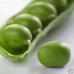 SUPERGIANT RUSSIAN GARDEN PEA SEEDS XTRA LARGE SWEET TASTE PEAS