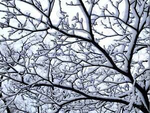 SNOWY-TREE-WINTER-BRANCHES-PHOTO-ART-PRINT-POSTER-PICTURE-BMP2388B