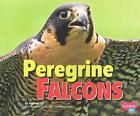 Peregrine Falcons von Melissa Hill (2015, Taschenbuch)