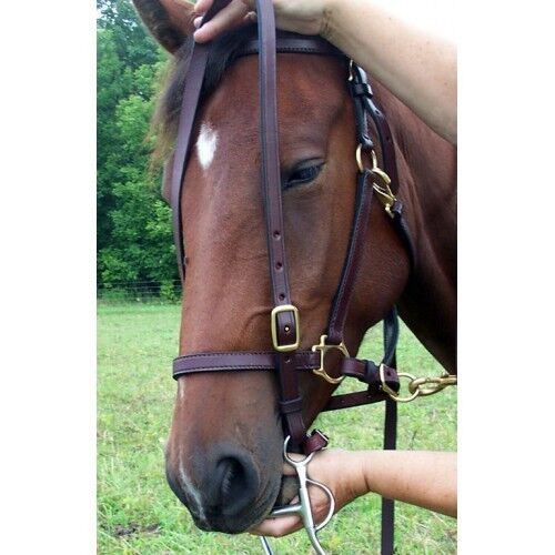 Ride  'N Tie® Halter Bridle Combo Top Seller Horses and Riders   It  preferential