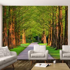 Green Trees Plants Road Walk Nature Wallpaper Mural Wall Art Photo