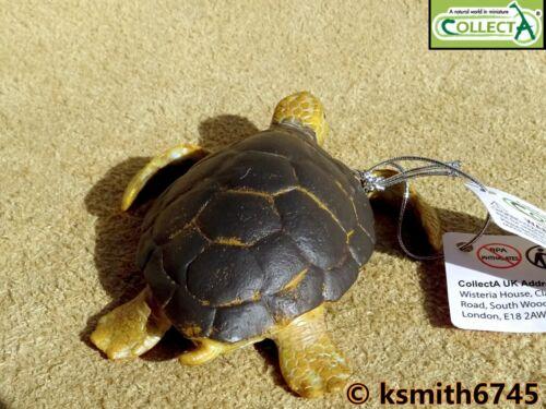 CollectA CARETTA Caretta solido in plastica giocattolo Wild Zoo Animali Marini NUOVO
