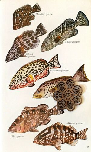 Vtg 1977 Naturalist Art Print Fish Taxonomy *** SEE VARIETY
