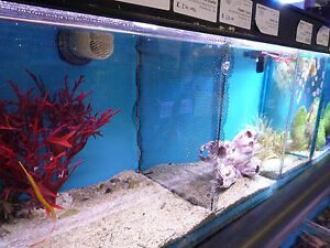 Custom Made Aquarium Tank Divider /net Partition Size C Cichlid Fashionable Style; Tropical Fish In