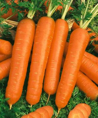 1 oz Carrot Seed, Scarlet Nantes, Heirloom Bulk Carrots, Coreless, Approx 23.500