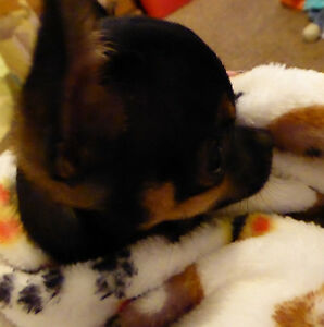 "Pet Blanket Super Plush Fleece Emoji Poo Poop Hearts Dog Prints Small 30"" x 30"""