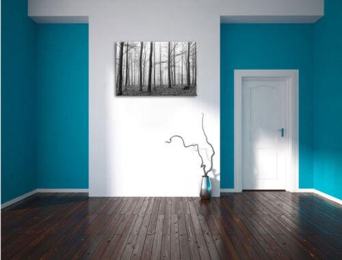 Abstrait Forêt Art B /& w toile déco art pression