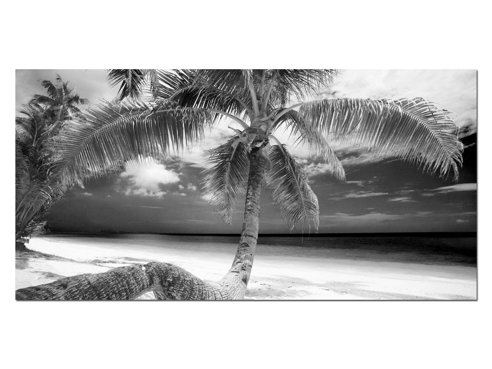 Deco Glas Bild EG4100500654 PALMS DREAMBEACH b w Größe 39,37  x 19,68  HD Pri