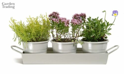 Garden Trading Set of 3 Steel Herb Plant Pots on a Tray Grey or White NEW
