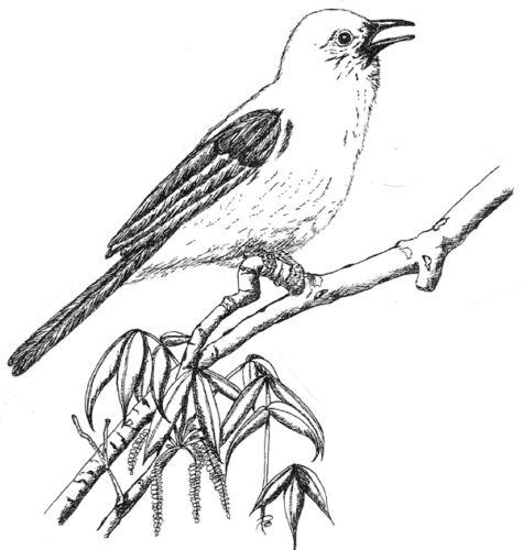 Birds Mockingbird Nature Bird Flowers Bird Stamps Unmounted Rubber Stamps