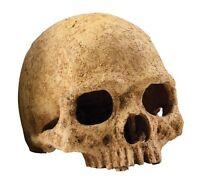 Exo Terra Primate Skull Terrarium D , New, Free Shipping