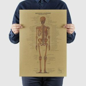 The-Human-Skeleton-Photo-Picture-Anatomy-Skeletal-System-Human-UwTXy-Esdtu-L7F1