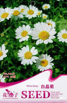 30 Original Package Seeds White Daisy Seeds Leucanthemum Paludosum A048