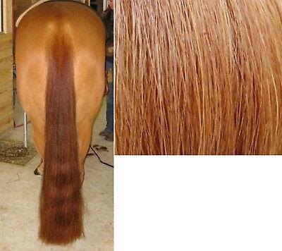 "1lb 36/"" Dark Sorrel 100/% Genuine Horse Hair Show Tail Extension AQHA APHA USEF"