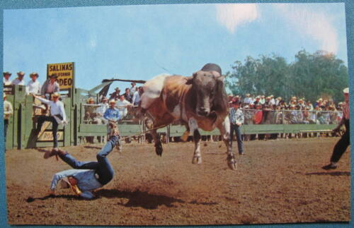 Photo Postcard Annual CA Rodeo Roberts Murchison 50s