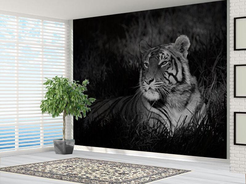 Schwarz und Weiß Tiger Sat in Gras Natur Tapete Foto Wandbild (14751945)