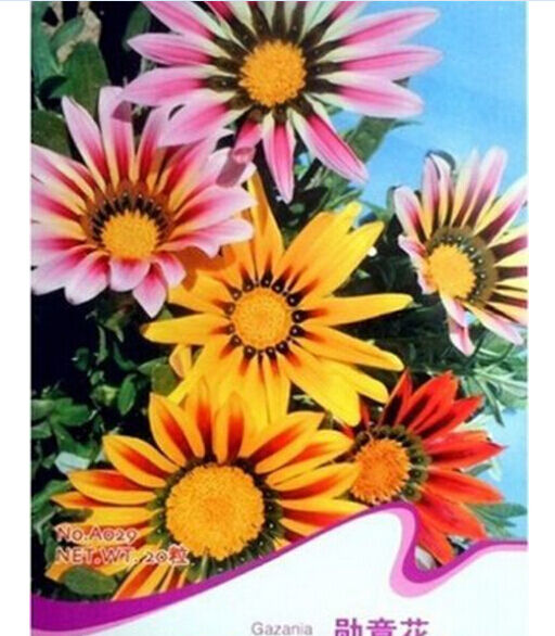 FD1536 50 Seeds Gorgeous Gazania Seed Mix Colorful Medal Of Flowers Beautiful