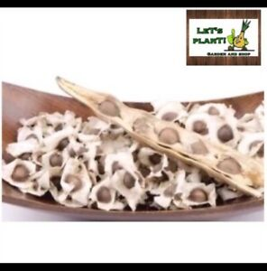 Moringa-Oleifera-60-Fresh-Viable-Seeds-Miracle-Tree-Germinate-Within-A-Week