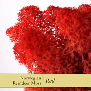 Dried-Reindeer-Moss-Ruby-Red-Perfect-for-air-plants-amp-Craft