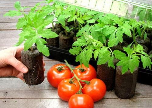 fleur Tomate boutures graines commencer la germination Jiff 55 pcs 41 mm mousse de tourbe pellets