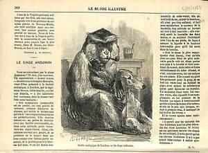 SINGE-MONKEY-London-Regent-039-s-Zoo-GREAT-BRITAIN-ENGLAND-UK-ANTIQUE-PRINT-1869