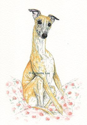 Whippet greyhound Dog Garden Watercolor//ink  painting 50 Dogs By Bridgette Lee