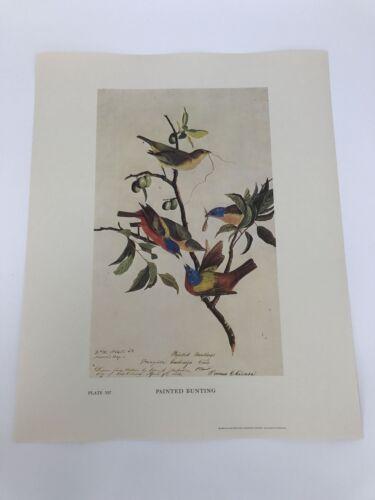 John James Audubon Folio Plate 357 Painted Bunting Limited 750