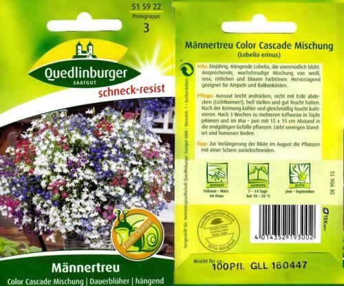 hängender Dauerblüher Männertreu Color Cascade Mischung Blumen Samen