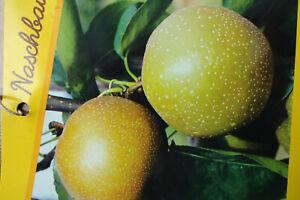 die Kletter-Kiwi mit großen Früchten. eine leckere Vitamin-C-Bombe