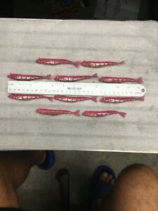 "10 Saltwater Assassin 4"" SW Split Tail Shad Neon Mercury New"