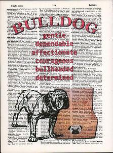 English Bulldog Traits Altered Art Print Upcycled Vintage Dictionary Page UGA