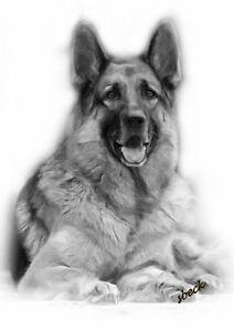 Grande superbe berger allemand chien dessin imprim - Dessin de chien berger allemand ...