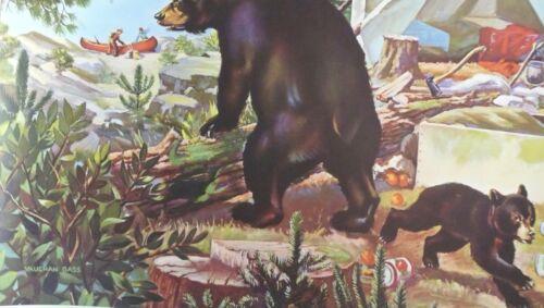 VAUGHAN BASS  BEARS HUNTING CAMPING CALENDAR PRINT 40/'S 50/'S