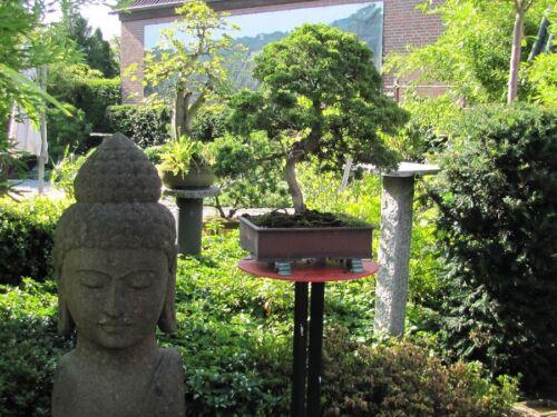 BONSAI Deko Pagode 22,5 cm Höhe zur Deko neben Bonsai oder Gartendeko