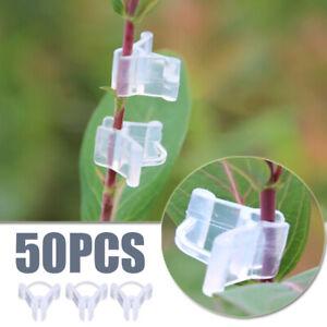 50PCS-Grafting-Clips-For-Garden-Vegetable-Flower-Gardening-Transparent-2019